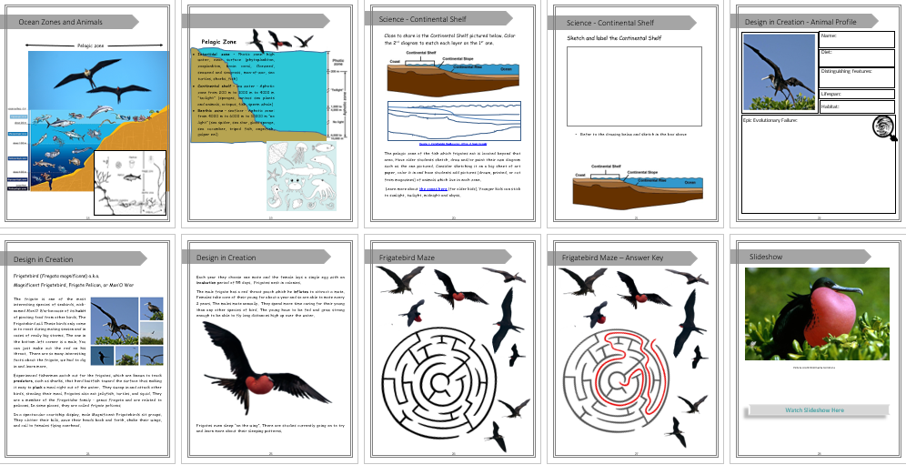 Magnificent Frigatebird Unit Study