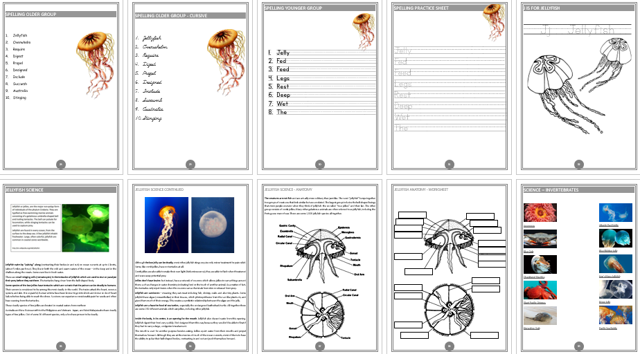 Jellyfish Unit Study - Australia