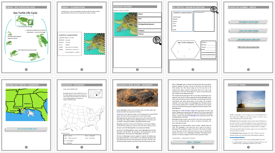 Sea Turtle Unit Study