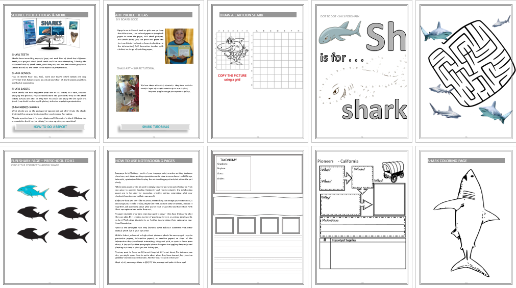Sharks Unit Study - California